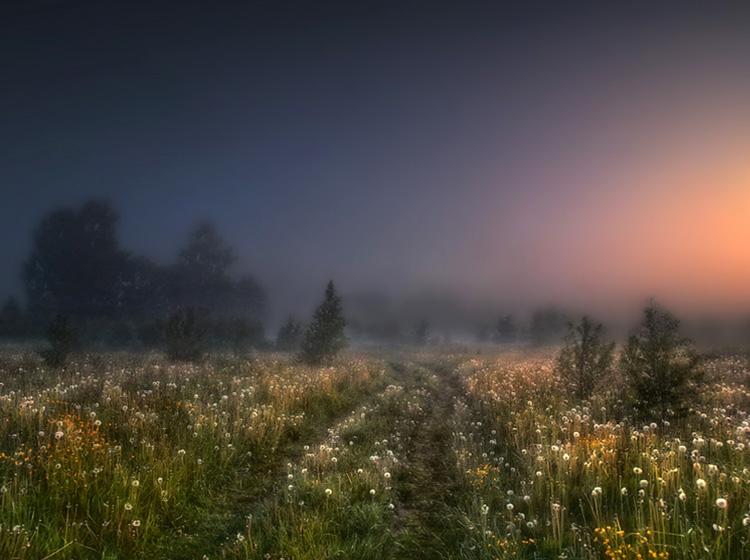 Ночная степь