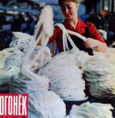 Камышанка Роза Стеблева на обложке журнала «Огонек». 1966 год