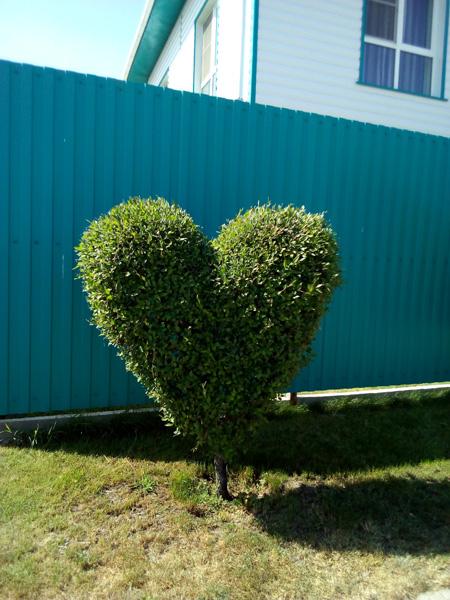 Большое сердце.